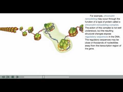 DNA Packaging Animation | chromatin, histone and nucleosome modifications