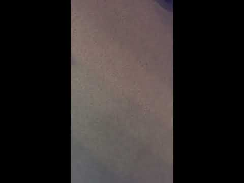 Cats Reaction To Donald Trump & Hillary Clinton Cat Toys