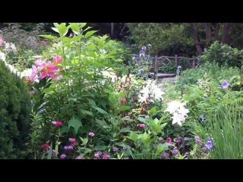 Central Park Flowers - Shakespeare Garden