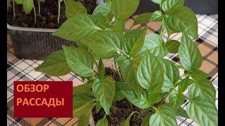 ОБЗОР РАССАДЫ  МАРТ 2018/ ВЫРАЩИВАЕМ КРЕПКУЮ РАССАДУ