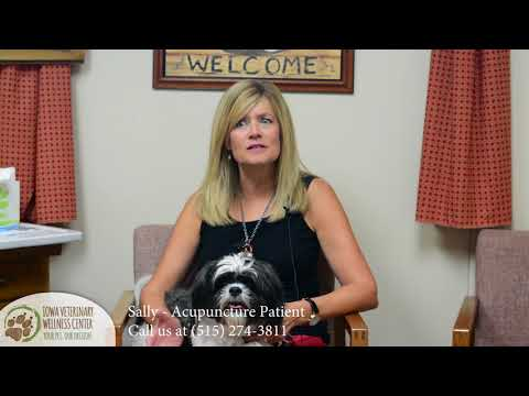 Pet Acupuncture in Des Moines IA - Iowa Veterinary Wellness Center