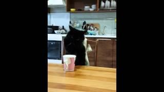 Кошка кушает за столом как человек лапой