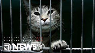 В российской тюрьме мотает срок... кот