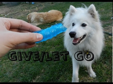 Teaching Your Puppy to Give/Let Go!