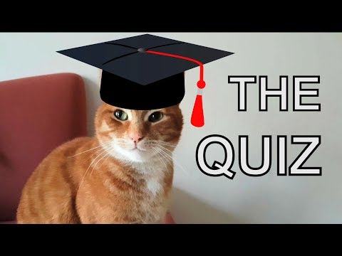 Alvi cat : the quiz