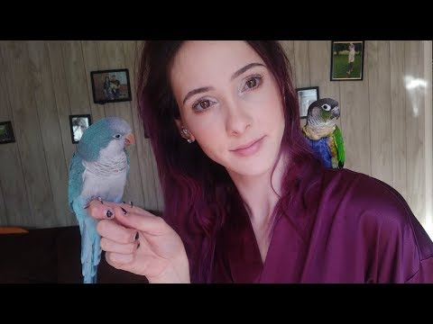 What A Morning Routine With A Green Cheek Conure And Quaker Parrot Is Like