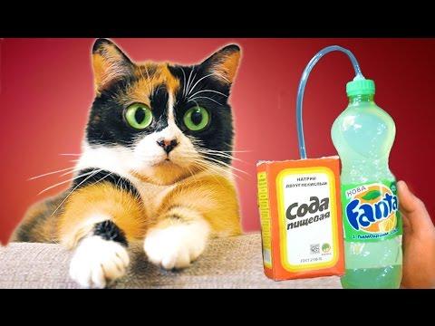Wie man eine prickelnde Limo selber macht!