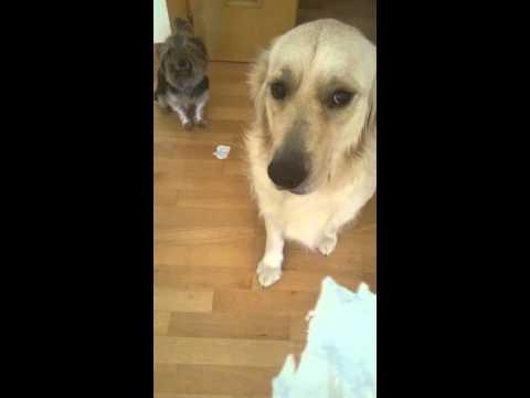Perro arrepentido delata a otro