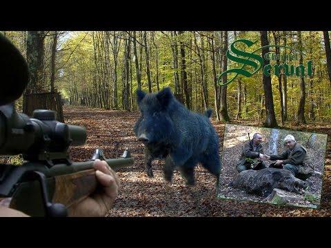 Wild Boar Hunting In Croatia ,part 3 - Kroatische Keiler 3 - Drückjagd