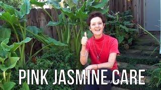 Pink Jasmine Care