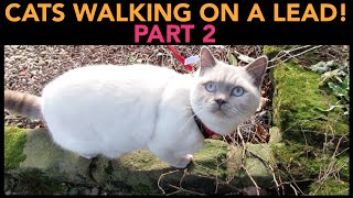 CATS WALKING ON A LEAD (PART 2)   CHRIS & EVE