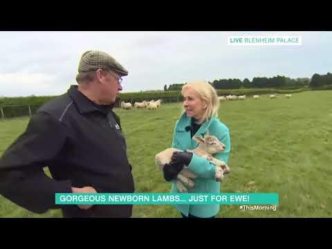 Sarah Greene Visits More Newborn Lambs | This Morning | This Morning