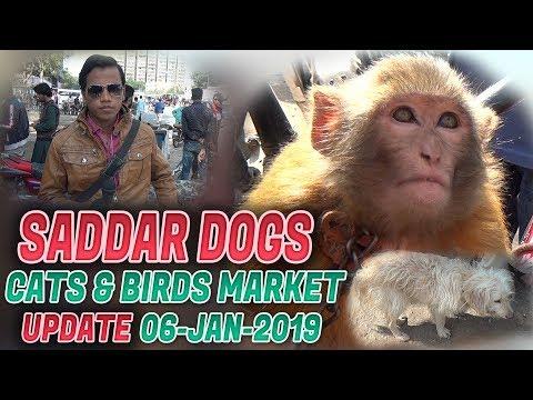Saddar Dogs Cats & Birds Market 6-1-19 Updates (Jamshed Asmi Informative Channel) In Urdu/Hindi