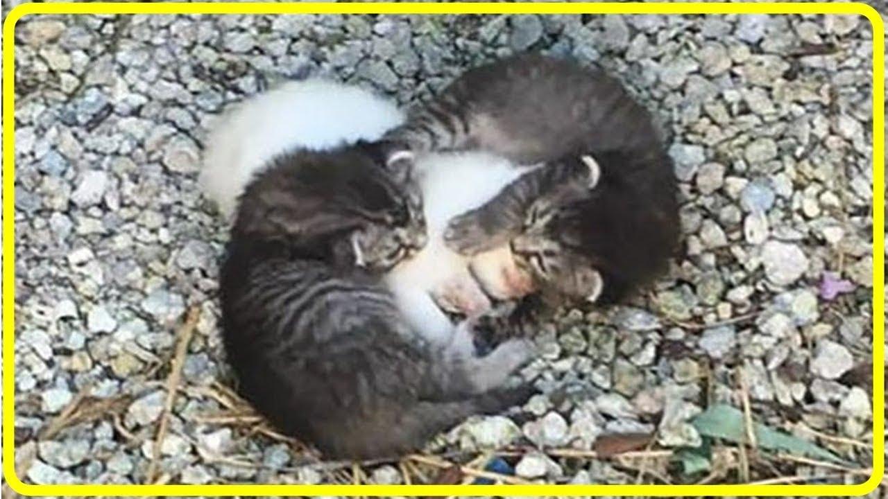 【感動】病気の妹猫を守る子猫。保護されて2匹の猫の母親になったのは先住犬だった!世界が感動!涙と感動エピソード】