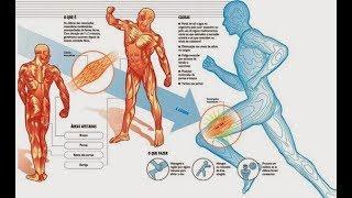 Magnésio nas o corporais ajuda cãibras