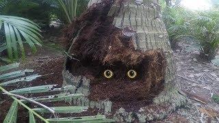 Đào gốc dừa mục phát hiện cái hang to bí ẩn | DÂN MIỀN TÂY