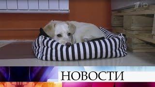 В Новосибирске открылось необычное «песокафе», откуда можно забрать домой четвероногого друга.