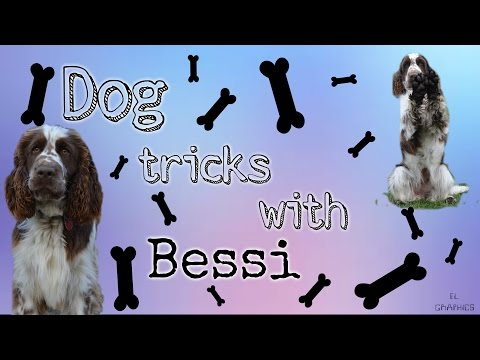 ◘Dog Tricks with Bessi/Triky s Bessi◘