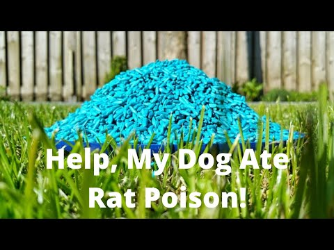 Help, My Dog Ate Rat Poison