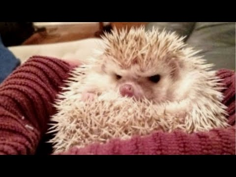FUNNY ANIMALS that will make you FORGET ALL YOUR PROBLEMS