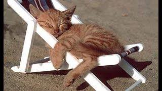 MUSICOTERAPIA Para Relajar Perros y Gatos Agitado ♥♥♥ Música Suave Para Calmar y Dormir Mascotas