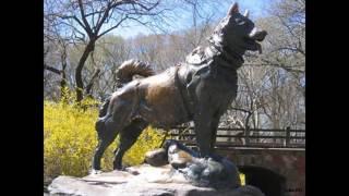 5 самых известных собак в мире