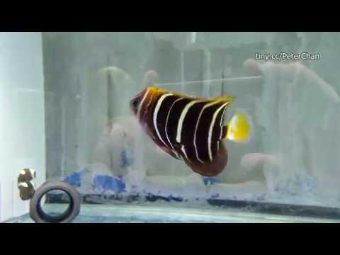 Very Pretty Marine Fish