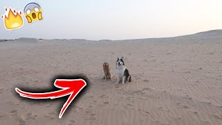 Prank! Left Rocky and Lucy Alone in the Desert to See What Happens!!