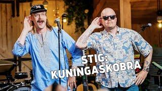 STIG – Kuningaskobra | Vain elämää