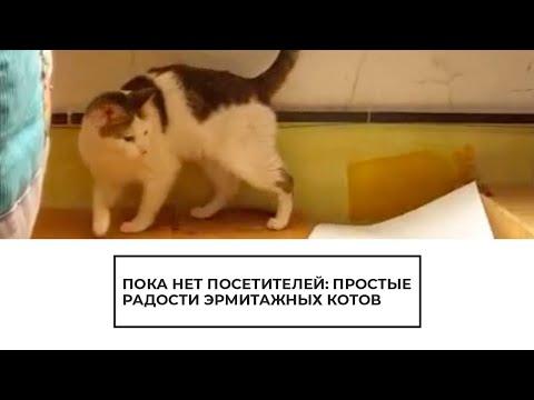 Как живут эрмитажные коты в самоизоляции