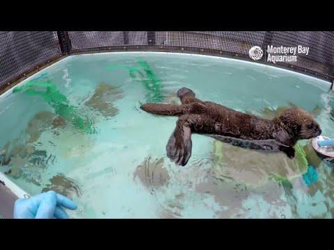 Saving Sea Otter 696: Ditching Baby Food