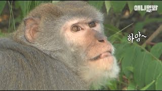 A Crab-eating Macaque living not in a jungle, but in the city?!