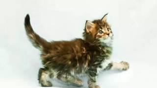 Умеют ли кошки находить дорогу домой.🐾🐾🐾