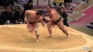 【激しい立ち回り】 海龍 vs 千代の国 2015大相撲九州場所 2日目 千代の国 検索動画 24