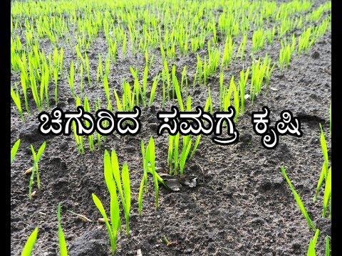 Integrated farming – Success story--ಚಿಗುರಿದ ಸಮಗ್ರ ಕೃಷಿ