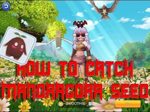Cara Nangkep Mandragora Seed Ragnarok Mobile Youtube