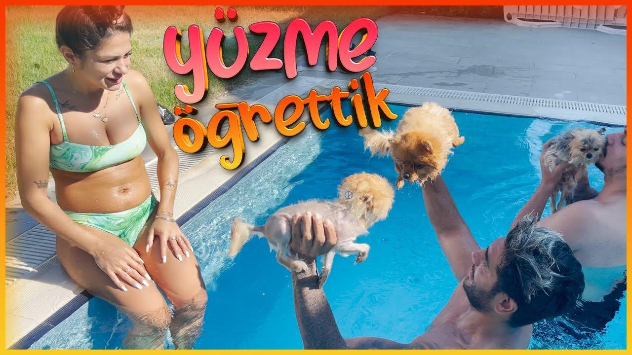 Pomeranian'larımıza Yüzme Öğrettik