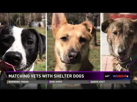 Rescuing veterans   rescuing shelter dogs = saving lives