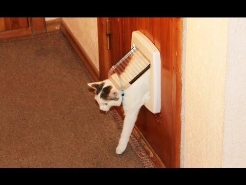 Установка дверцы для кошек - YouTube