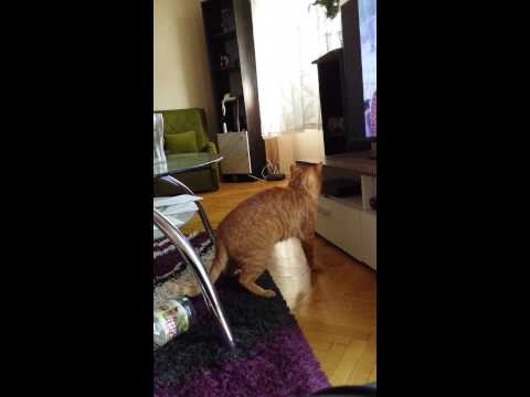 Funny cat scared