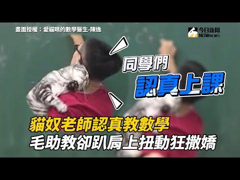 貓奴老師認真教數學 毛助教卻趴肩上扭動狂撒嬌