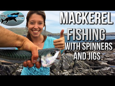 Mackerel Fishing from the shore | TAFishing