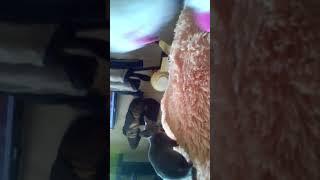 Котёнок против Единорога