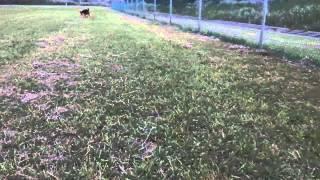とにかくボール遊びが大好き。 そしてこの芝生の上も大好きです。