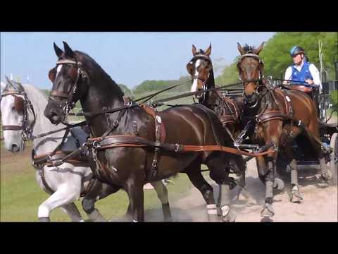 Horse Driving Kronenberg 2018: Bram Chardon (NED)