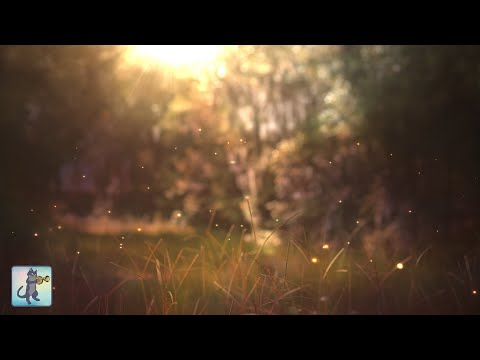 Beautiful Piano Music ~ Relaxing Music For Sleep, Study, Meditation & Yoga • Screensaver • 3 HOURS
