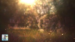 Beautiful Piano Music  Relaxing Music For Sleep Study Meditation Andamp Yoga • Screensaver • 3 Hours
