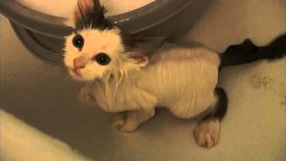 Из жизни кота Тяпы. Смываем блох!