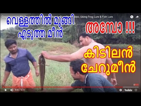 Crazy Amazing Big Snakehead Catching In Kerala River New