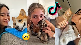 Kiss Your Pet On The Head And See Their Reaction   TikTok Compilation